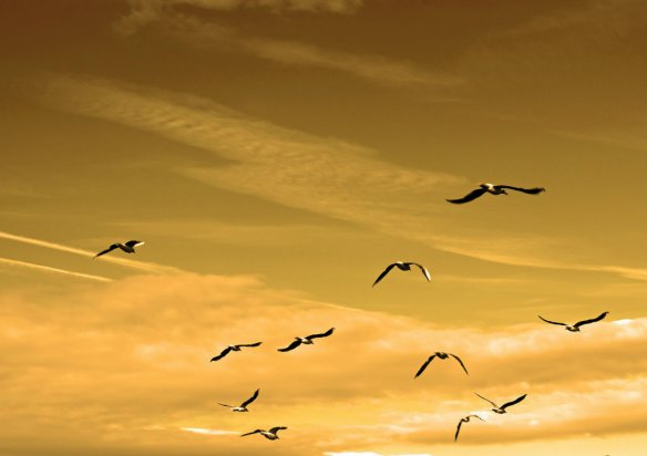 Facing Fear and Finding Peace - Birds in the air